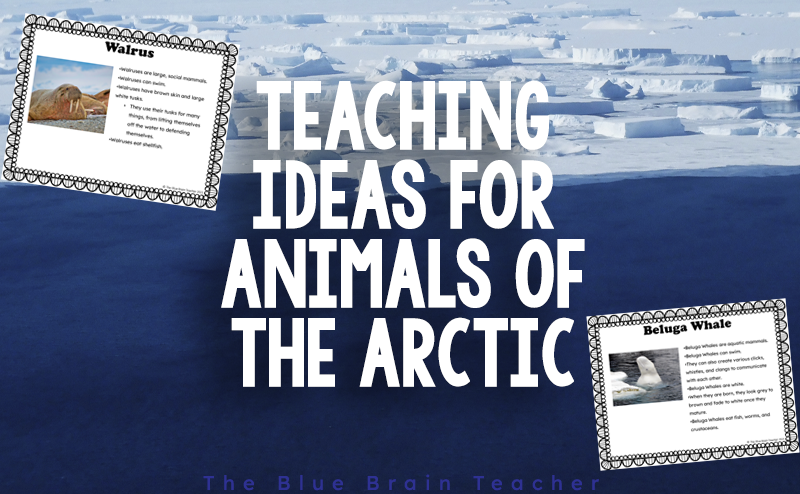How to Teach about Arctic Animals So Kids are Engaged