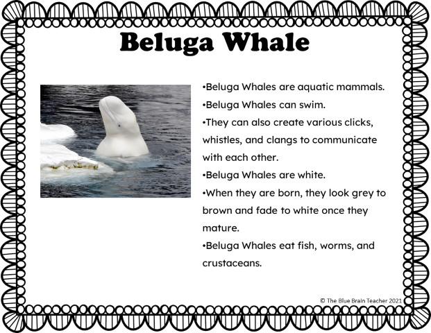 arctic animals beluga