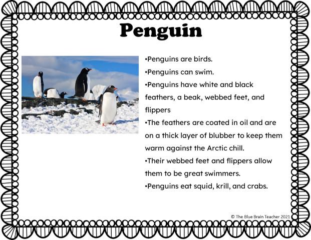 arctic animals penguin