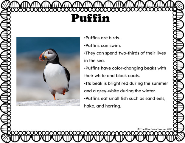 Puffin arctic animals